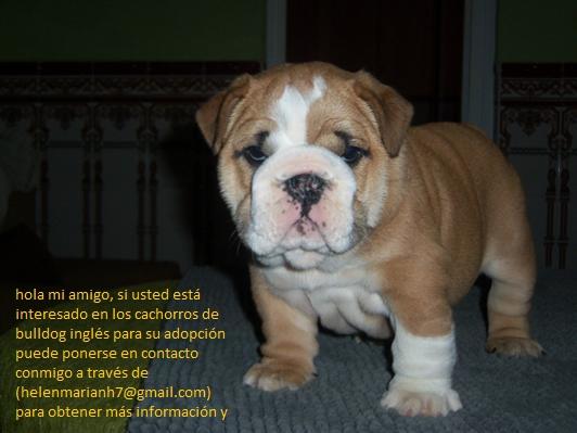 adoptieren hunde  annhmen pet  adoptieren welpen  zu verschenken